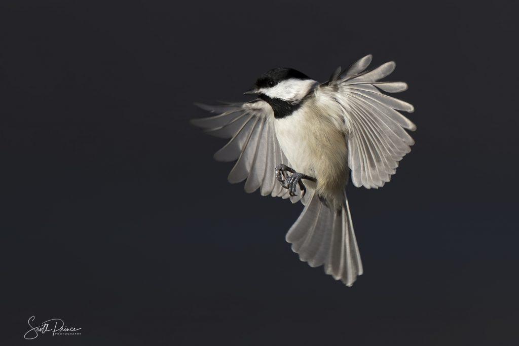 learn backyard bird photography