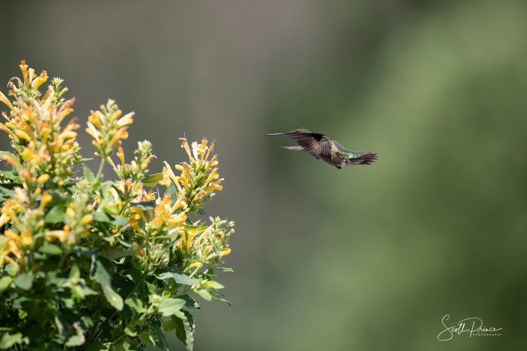 how to photograph backyard birds